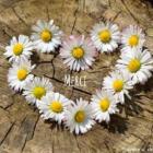 Céline Chabloz - blog de Saveurs de Vie